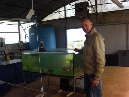 gold-fish-italia-riproduzione (3)