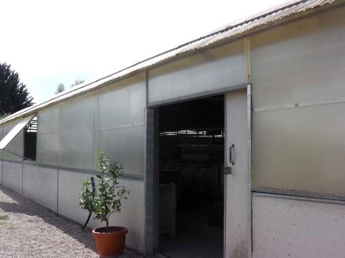 gold-fish-italia-showroom (2)