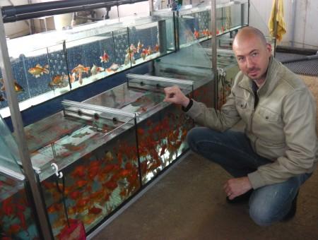 gold-fish-italia-gallery (15)